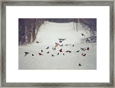 Feathered Friends Framed Print by Carrie Ann Grippo-Pike
