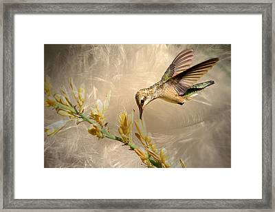 Feathers Framed Print by Donna Kennedy