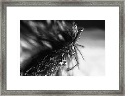 Feathery Drop Framed Print by Lauri Novak