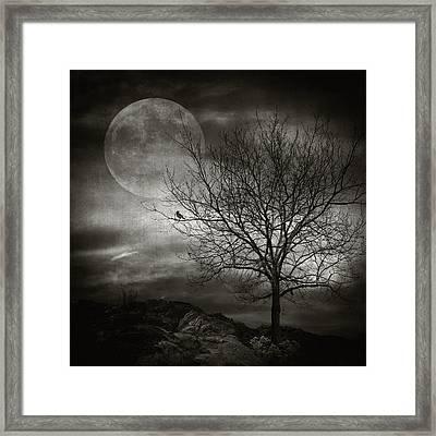 February Tree Framed Print by Taylan Soyturk