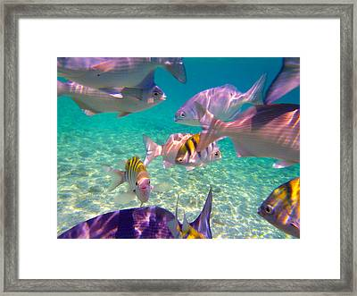 Feed Time Framed Print by Carey Chen