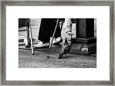Feeding A Pigeon Mono Framed Print by John Rizzuto