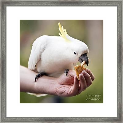 Feeding Birds Framed Print by Tim Hester