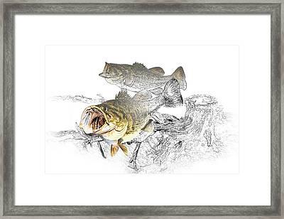 Feeding Largemouth Black Bass Framed Print by Randall Nyhof