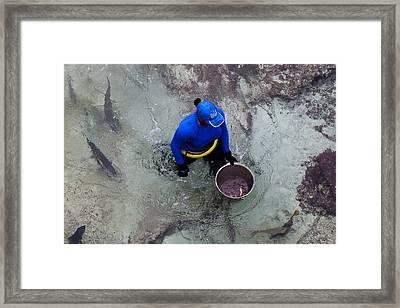 Feeding The Sharks Framed Print by Susan Stone