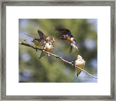 Feeding Time Framed Print by Tracey Levine