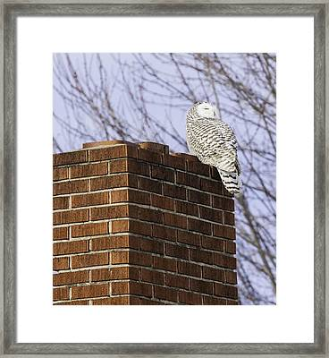 Feel The Heat Framed Print by Thomas Young