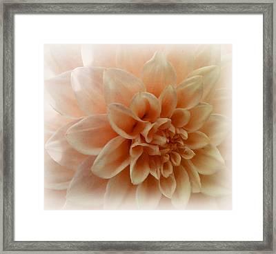 Feeling Peachy Framed Print by Faye Giblin
