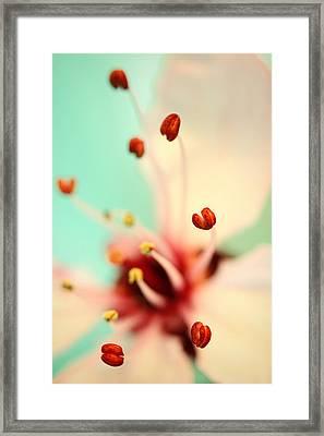Feeling Spring Framed Print by Sharon Johnstone