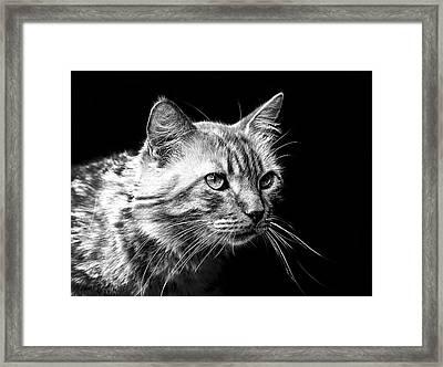 Feline Framed Print by Camille Lopez