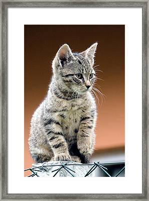 Felix Framed Print by Davorin Mance