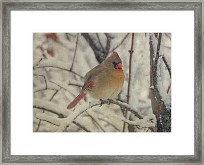Female Cardinal In The Snow II Framed Print by Sandy Keeton