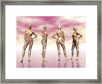 Female Muscular System From Four Points Framed Print by Elena Duvernay
