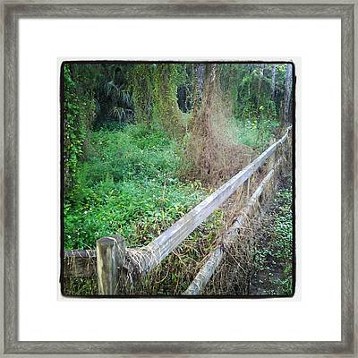 Fence Framed Print by Chasity Johnson