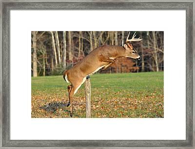 Fence Jumper Framed Print by Todd Hostetter