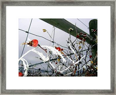 Fence Line Framed Print by Will Borden