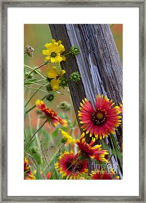 Fenceline Wildflowers Framed Print by Robert Frederick