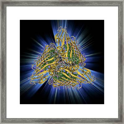 Fenna-matthews-olson Complex Molecule Framed Print by Laguna Design