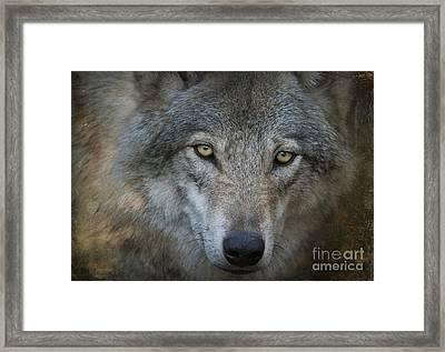 Fenris... Framed Print by Nina Stavlund