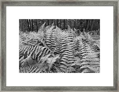 Fern Framed Print by Bill Wakeley