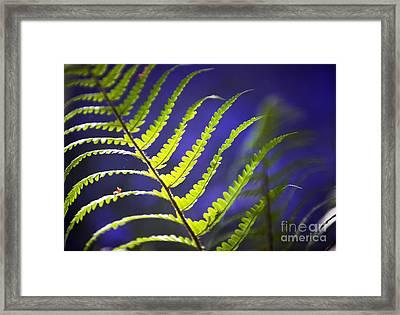 Fern Light Framed Print by Tim Gainey