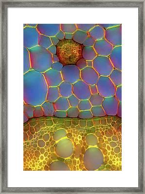 Fern Stem Framed Print by Marek Mis