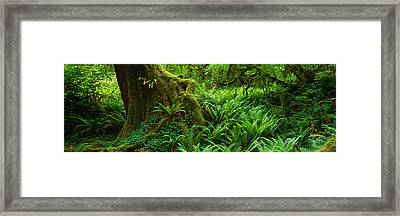Ferns And Vines Along A Tree With Moss Framed Print by Panoramic Images