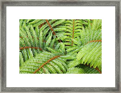 Ferns Forest Art Prints Green Fern Fronds Framed Print by Baslee Troutman