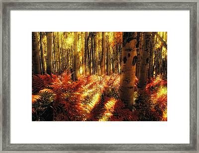 Ferns On The Forest Floor Framed Print by Teri Virbickis