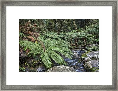 Ferntree Gully Framed Print by Shari Mattox
