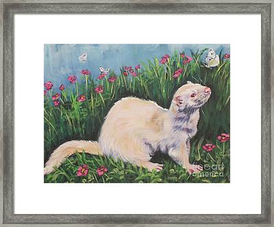 Ferret Framed Print by Lee Ann Shepard