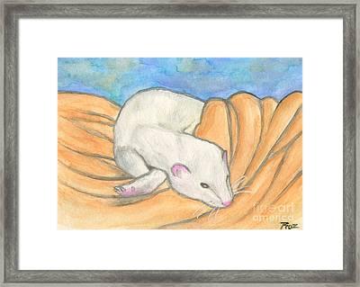 Ferret's Favorite Blanket Framed Print by Roz Abellera Art