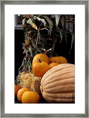 Festive Fall Framed Print by Sharon Elliott