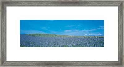 Field Biei-cho Hokkaido Japan Framed Print by Panoramic Images