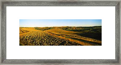 Field, Crete Senesi, Tuscany, Italy Framed Print by Panoramic Images
