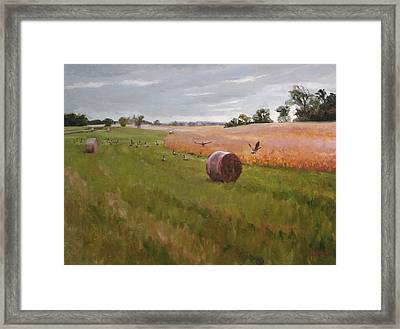 Field Day Framed Print by Scott Harding