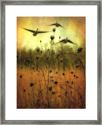 Field Dwellers  Framed Print by Gothicolors Donna Snyder