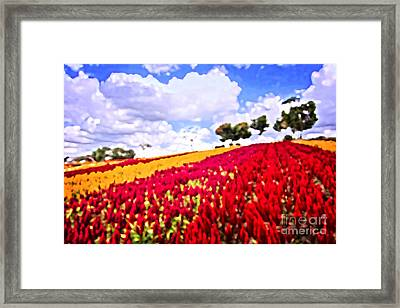 Field Of Colorful Plumed Cockscomb Framed Print by Beverly Claire Kaiya