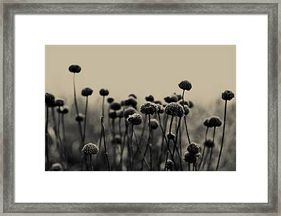 Field Of Dreams Framed Print by Joy StClaire