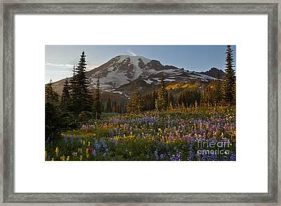 Field Of Dreams Framed Print by Mike Reid