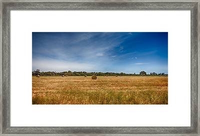 Field Of Dreams Framed Print by Shari Mattox