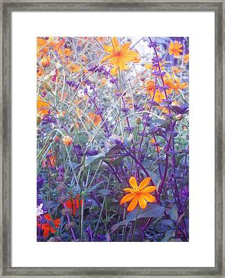 Field Of Flowers  Framed Print by Ankya Klay