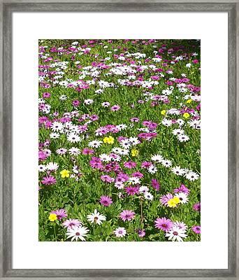Field Of Flowers Framed Print by Deborah  Montana