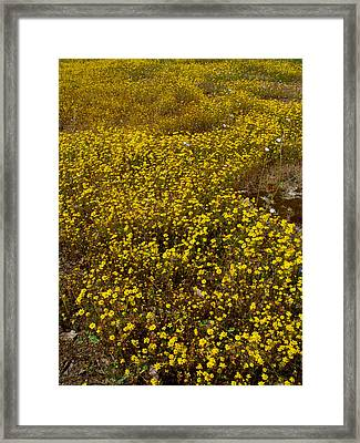 Field Of Goldfields In Park Sierra-ca Framed Print by Ruth Hager
