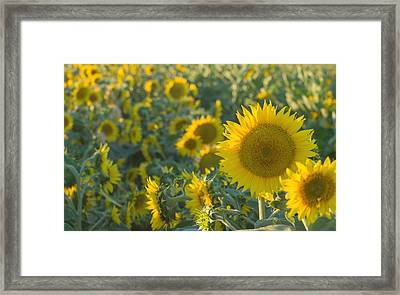 Field Of Happiness Framed Print by Rima Biswas