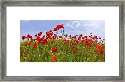 Field Of Red Poppies Framed Print by Melanie Viola