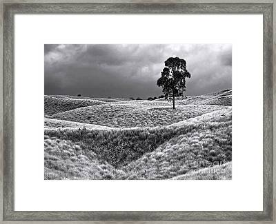 Field Of Saddle Road Dreams Framed Print by Ellen Cotton