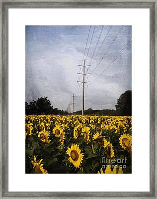 Field Of Sunflowers Framed Print by Elena Nosyreva