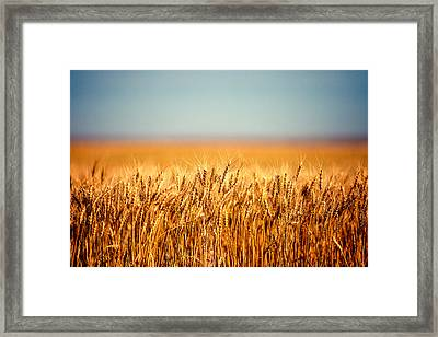Field Of Wheat Framed Print by Todd Klassy