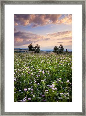 Field Of Wildflowers Framed Print by Brian Jannsen